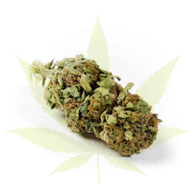 "Swiss ""firstclass"" Cannabis Indoor CBD ""Strawberry One"" 2.0g - 24.0g 1"