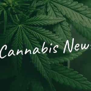 Cannabis Pilotversuche USA