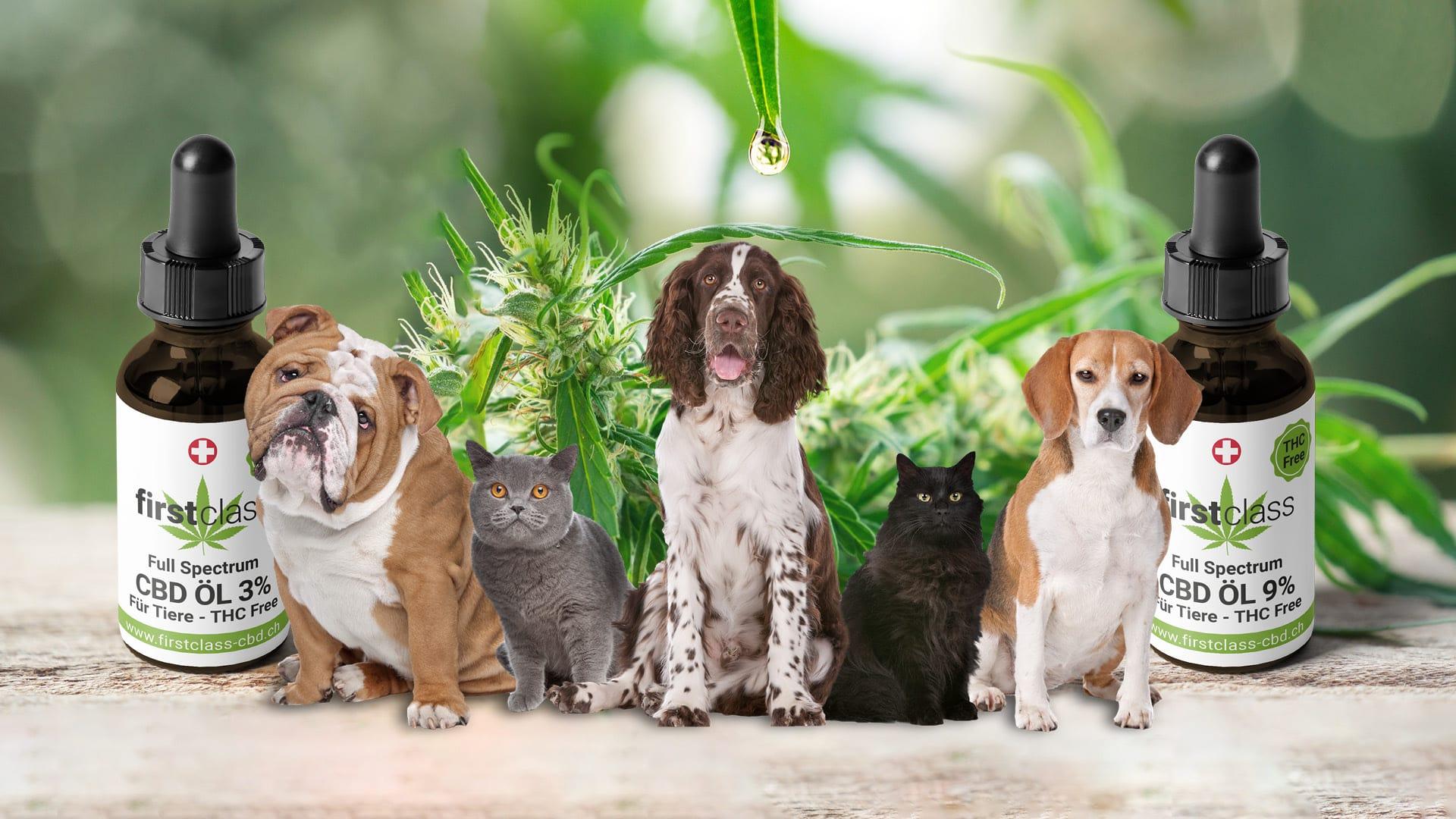 CBD Öl für Tiere - bestes Hanf Öl für Haustiere