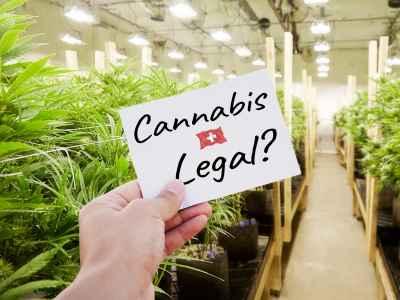Wann wird Cannabis in der Schweiz Legal?